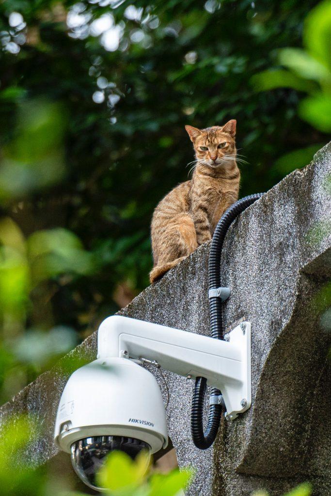 Van a vigilar hasta al gato