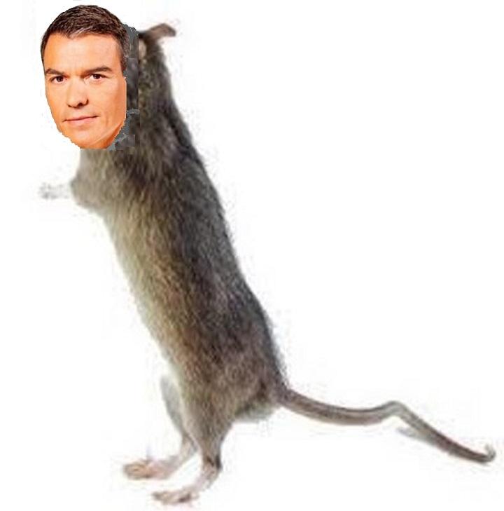 La rata de dos patas