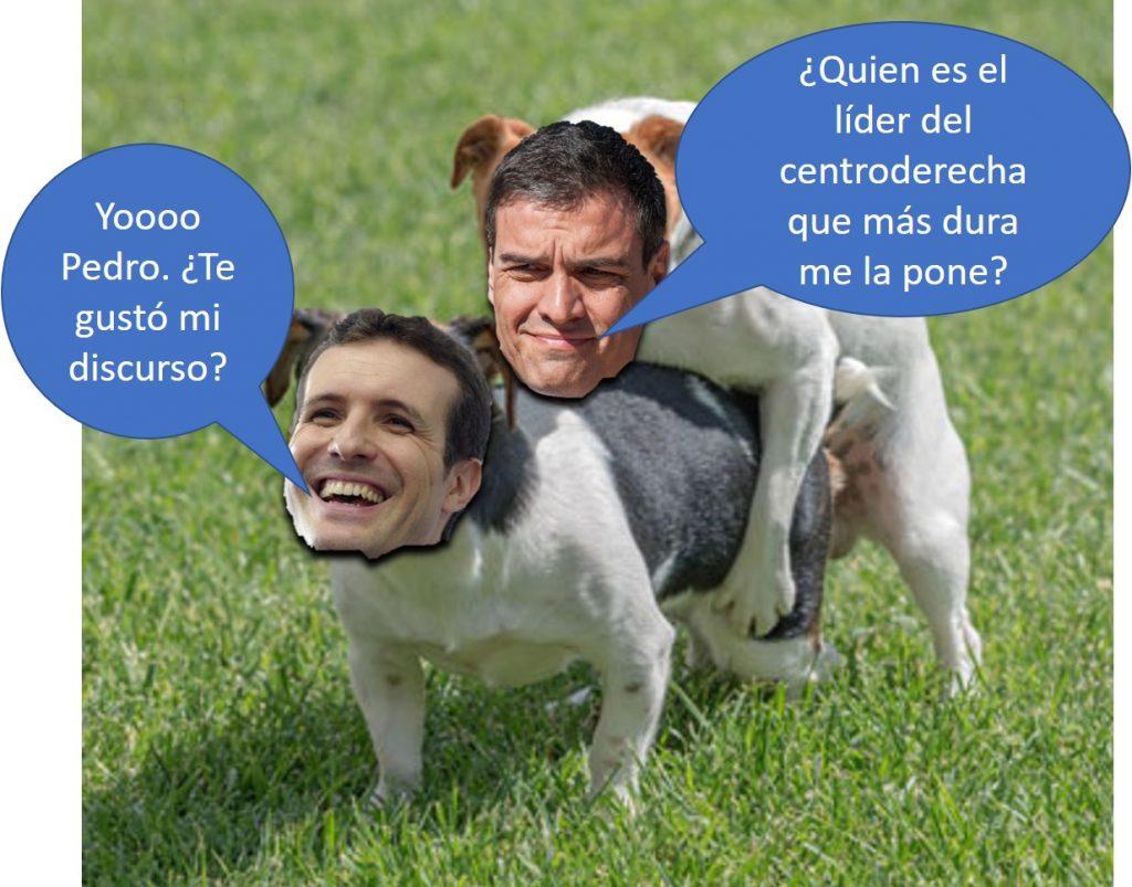 Perro Sánchez se empotra a Caniche Casado